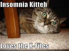 Insomnia Kitteh Loves the X-Files Abdominal Exercises, Cant Sleep, Insomnia, Favorite Tv Shows, Nerdy, Believe, Love, Think, Books