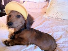 Country Club Weinie
