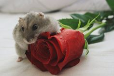 I got her this rose for Valentine's.