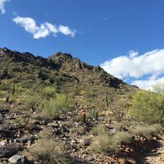 Phoenix Mountain Park Freedom Trail is easier, better for than summit for younger kids.