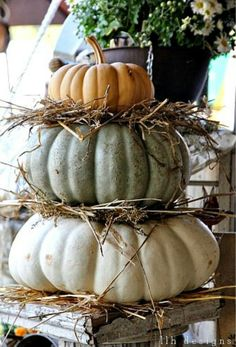 Neutral pumpkins so pretty on the chippy pedestal