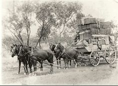 Christmas mail is delivered to Cloncurry, NSW, Australia, by a Cobb & Co coach, 1908 v Australian Continent, Destinations, Mystery Of History, Largest Countries, History Photos, Historical Pictures, Old West, Tasmania, Old Photos