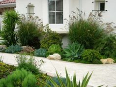 Like the large plants framing the window and the round succulent under window. Succulent Path Garden Walkway and Path Designs by Shellene San Diego, CA Succulent Landscaping, Modern Landscaping, Front Yard Landscaping, Succulents Garden, Landscaping Ideas, Walkway Ideas, Succulent Plants, Backyard Ideas, Dry Garden