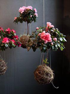 Hanging Gardens - Azaleas | Garden Design