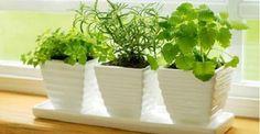 - Aprenda a preparar essa maravilhosa receita de 10 plantas que atraem energias positivas