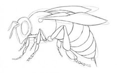 как нарисовать насекомых