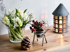 Jouluiset kukka-asetelmat koristavat kodin – Kotiliesi