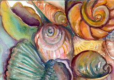 EFA - Artists Helping Animals - Member Charity Promotions Blog: Shells Watercolor Painting by sharonfosterart