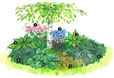 """Shady Island Bed from """"Perennials.com"""" Check out the original image for the complete list of plants, then visit Out of Eden GC to see these plants, """"Live and In-Person""""! (Diy Garden Borders)"""