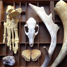 Bones The Naturalist