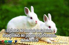 Proverbs 21:29