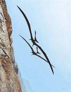 pteranodon sternbergi updraft cretaceous painting