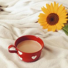 Bom dia bom dia bom dia!!! ✨❤️❤️❤️❤️