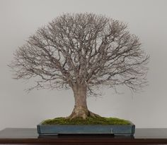 The Omiya Bonsai Art Museum, Saitama
