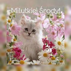 Kittens Cutest, Good Morning, Animals, Humor, Fotografia, Polish, Pictures, Buen Dia, Animales