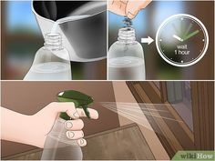 Image intitulée Make Spider Repellent at Home Step 8