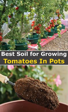Today's article contains my pick of the best soil for tomatoes in pots. You will also find great choices for seed starting and growing tomatoes in raised beds too. If you are looking for the best soil for growing tomatoes in containers, then you've come to the right place. I've sifted through about 30+ commercial potting mixes available in the market and came up with a shortlist of 7 potting mixes under $50 that ticked all the boxes . Check out the article and then leave your comment...