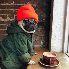 I present: hipster pug