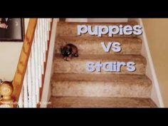 WATCH: Adorable Puppies vs. The Stairs!