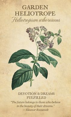 Deck of the Day — Botanical Inspirations Botanical Flowers, All Flowers, Botanical Art, Botanical Illustration, Vintage Flowers, Victorian Flowers, Vintage Botanical Prints, Flower Meanings, Meaning Of Flowers