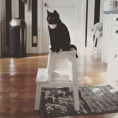 Hoe laat eten we?  #kat #cat #mouse #kitchen #keuken #home #zwartwit #blackandwhite #keukentrapje #ikea #koesfabriek