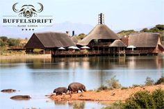 Oudtshoorn Holiday Accommodation - Buffelsdrift Game Lodge offers full service accomodation in the Western Cape Garden Route, South Africa . Game Lodge, Garden Route, Port Elizabeth, Small Group Tours, Wale, Slow Travel, The Beautiful Country, Beautiful Places, Luxury Camping