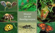 SoortenBank.nl : Insecten : Sleutel