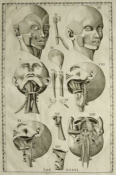 1714. Tab. XXXXI. Tête humaine, vues différentes. Bartolomeo Eustachi (https://pinterest.com/pin/2873860199440 Eustachius). Tabulae Anatomicae. Première édition.  [Romanae archetypae tabulae anatomicae: https://pinterest.com/pin/287386019942635678]. Anatomie humaine.