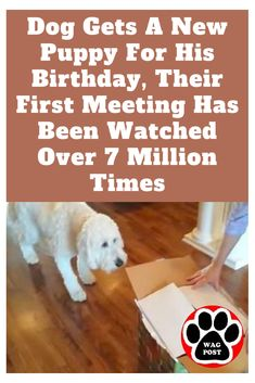 Dog Gets A New Puppy For His Birthday, Their First Meeting Has Been Watched Over 7 Million Times Puppy Care, Pet Puppy, Pet Dogs, Dogs And Puppies, Dog Cat, Rescue Dogs, Pet Care, Online Pet Supplies, Dog Supplies