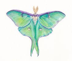 Luna Moth Actias luna original watercolor by GreenvilleFineArts