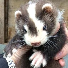 (Pic not mine) Badger (Male-MOUNTAIN TRIBE Warrior)