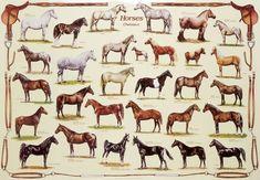 equine science: breeds