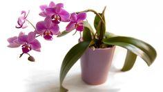 como se cuida una orquidea Outdoor Landscaping, Outdoor Gardens, Garden Of Eve, Organic Fertilizer, Types Of Plants, Ikebana, Houseplants, Shrubs, Planting Flowers