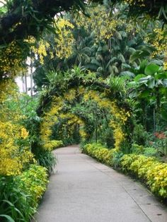 Walkway at the National Orchid Garden Singapore
