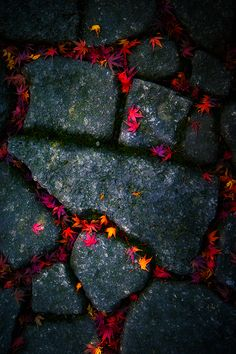 leaves on a stone path