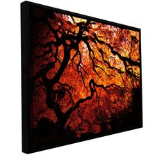'Fire Breather - Japanese Tree' by John Black Floater Framed Photographic Print Gallery-Wrapped on Canvas