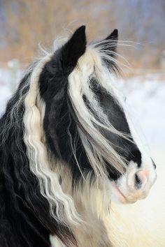 beautiful horse ~ ♥♥♥ ~