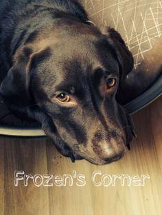 Die gute Happy <3 - Unsere treuesten Begleiter - Die Hunde... http://www.frozen-testet.com/2014/02/unsere-treusten-begleiter-die-hunde.html