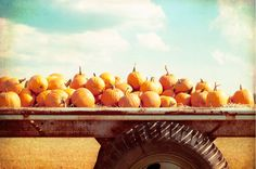 "Autumn Photography - pumpkins fall photography print - orange blue nature photo thanksgiving farm country rural - 8x12 Photograph, ""Harvest"". $33.00, via Etsy."