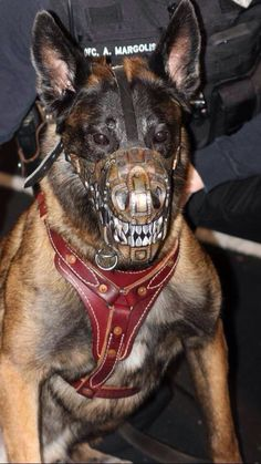 I think my fellow K9 handlers would be into this