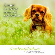 Check out this new blog which combines a love of gardening with a love of contemplation.