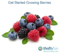 For the amount of effort it requires, growing fruits can sometimes be disappointing. That isnt usually the case with berries. Compared to tree fruits, berries are quick to bear, naturally resistant to pests and disease, and they require relatively little growing space.