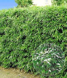 bambus im kübel kann eine terrasse im garten oder einen balkon mit, Best garten ideen