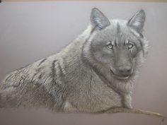 Loup ... pastel sur papier canson www.georges-rossi.com