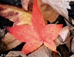 Fall in Washington