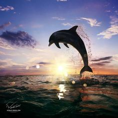 Free them from captivity! Don't buy tickets for dolphinshows!