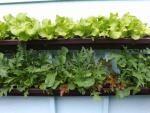 Lessons learned from rain gutter gardening | Juneau Empire Mobile