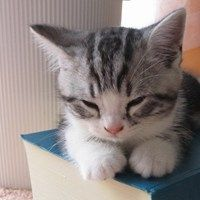 Cyoot Kitteh of teh Day: Curl Up With a Good Book - Cheezburger