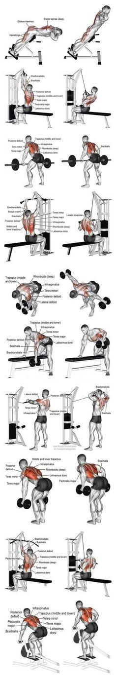 Fitness Motivation  : Anatomía de músculos ejercitados...