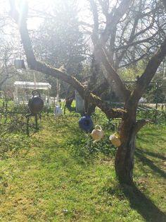 Ny jug  tree